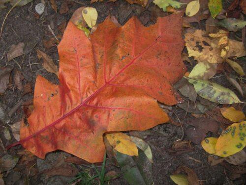 Haiku herfst